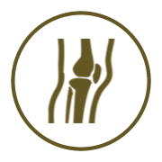 orthopedic-icon